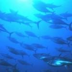 Peixes oceânicos