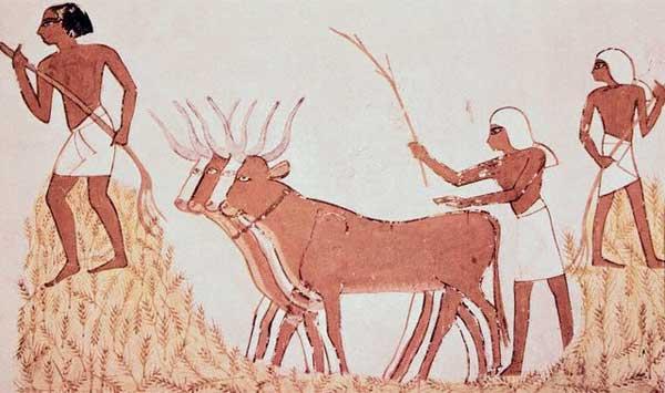 Primeiros agricultores