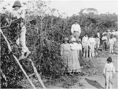 Imigrantes italianos em fazenda de café, século XIX.
