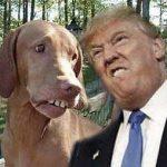 Trump, o presidente que ladra e morde