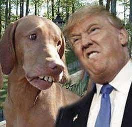 Trump soltando os cachorros