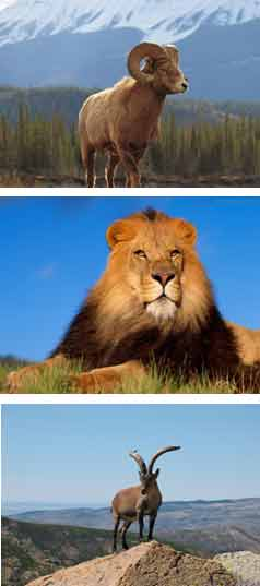 Três arquétipos - Áries, Leão e Capricórnio